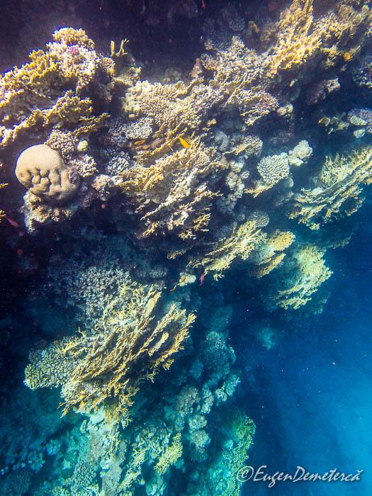 Corali la Blue Hole - Dahab, Marea Rosie