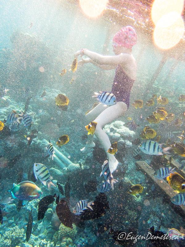Copil cu pesti exotici Marea Rosie - Egipt, destinaţia pentru vacanţe exotice la super-preţuri!