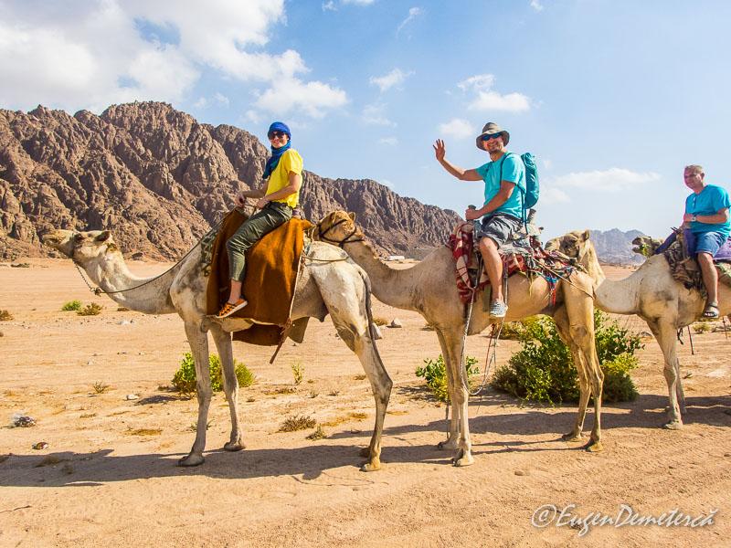 Eu si Elena pe camile - Egipt, destinaţia pentru vacanţe exotice la super-preţuri!