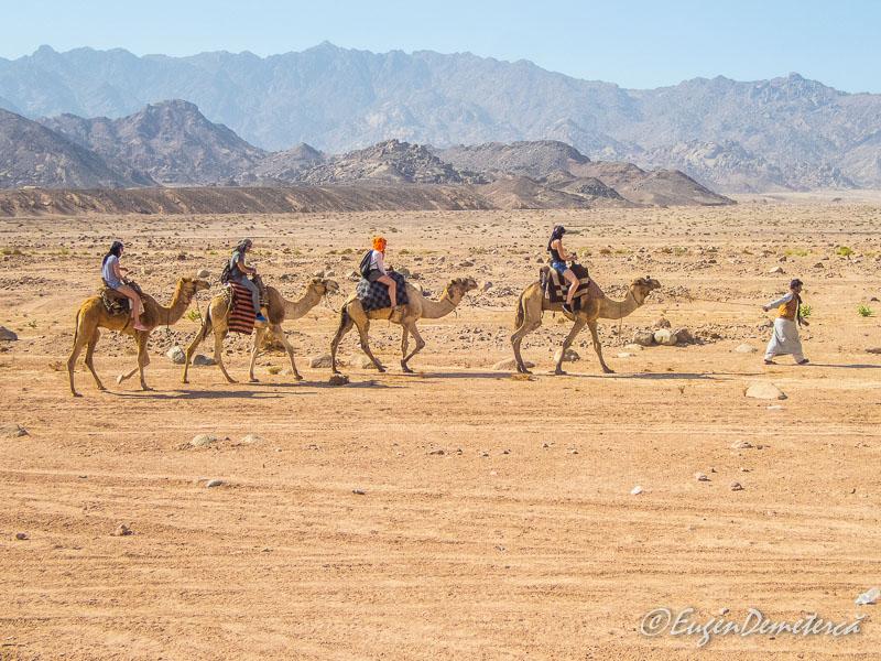 Sir camile Egipt - Egipt, destinaţia pentru vacanţe exotice la super-preţuri!