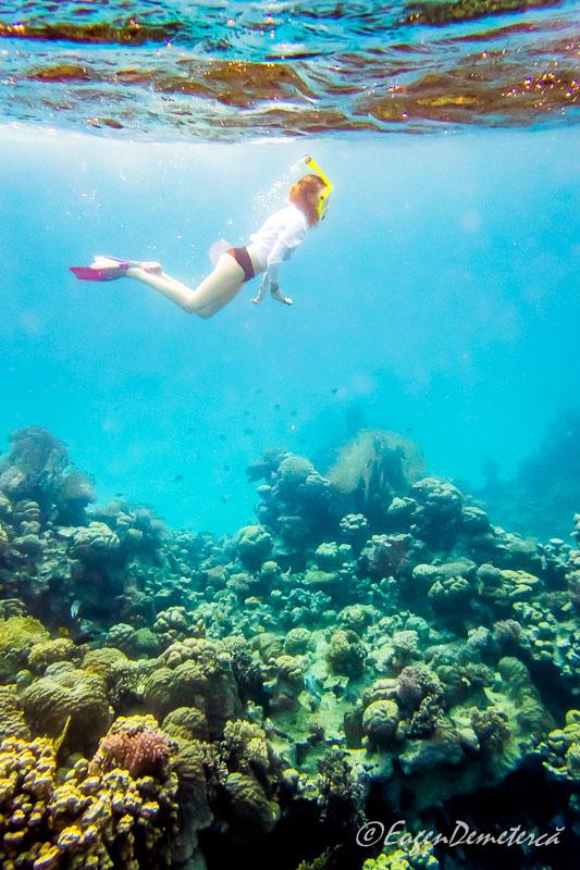 Snorkeling Egipt - Egipt, destinaţia pentru vacanţe exotice la super-preţuri!