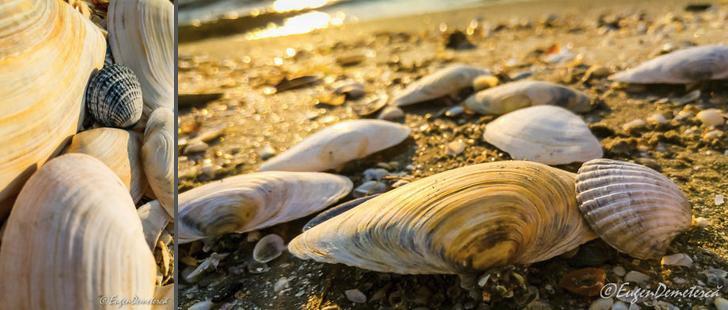 17 Plaja Mare 3 - Cu caiacul, din Deltă până la mare