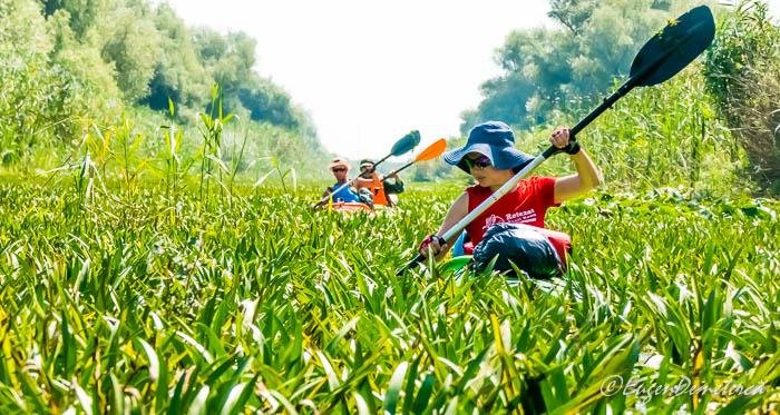 Caiace pe iarba in Delta