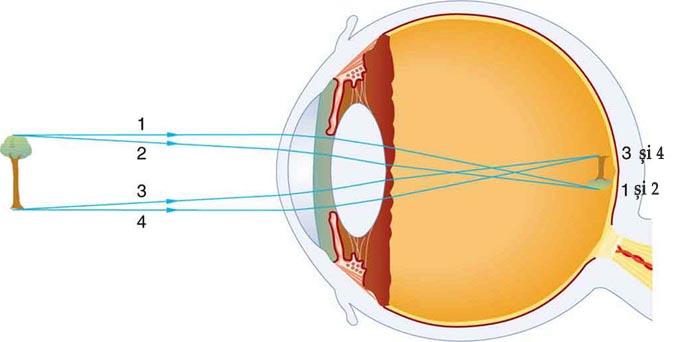 Diagrama vedere