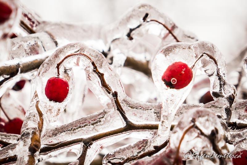 Fructe rosii in gheata 2