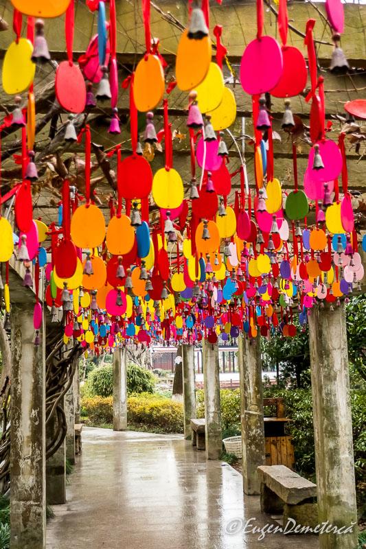 Culori in gradina Kezhi