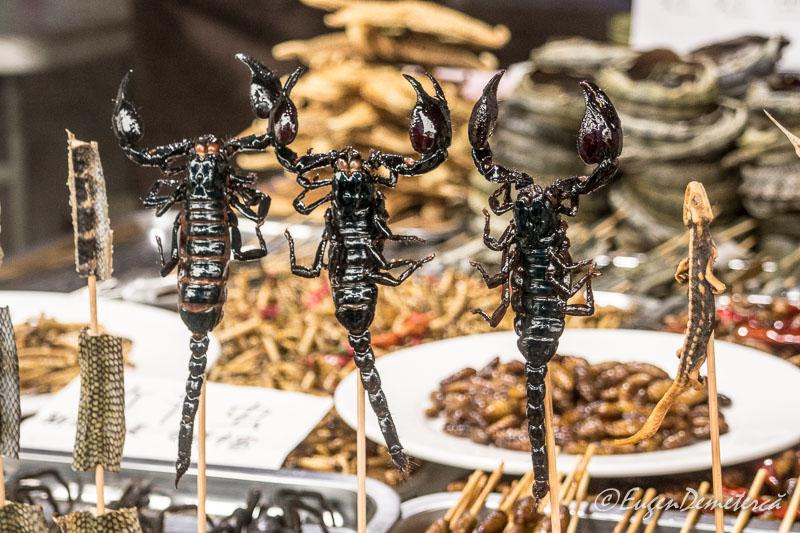 Scorpioni in Zhujiajiao