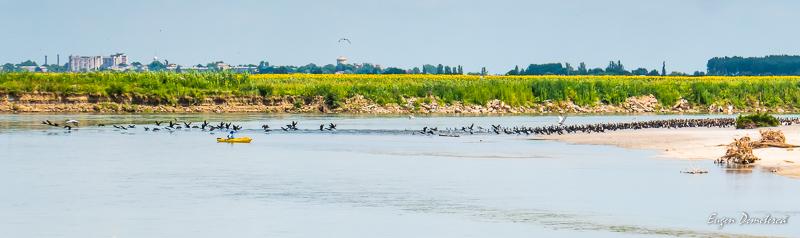 1260598 - Cu caiacul, de la Olt la Dunăre