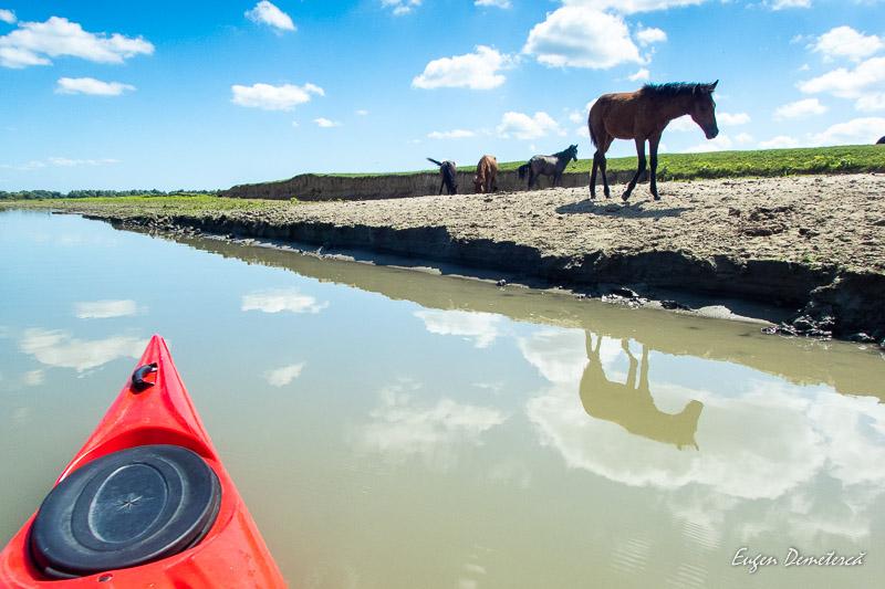 Cal in Delta Dunarii 1