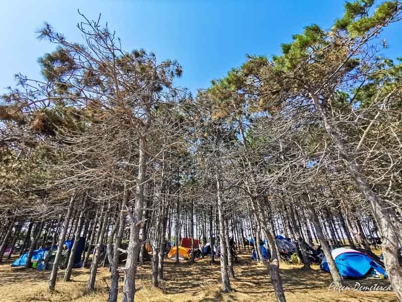 Corturi la umbra pinilor de la Ezerets