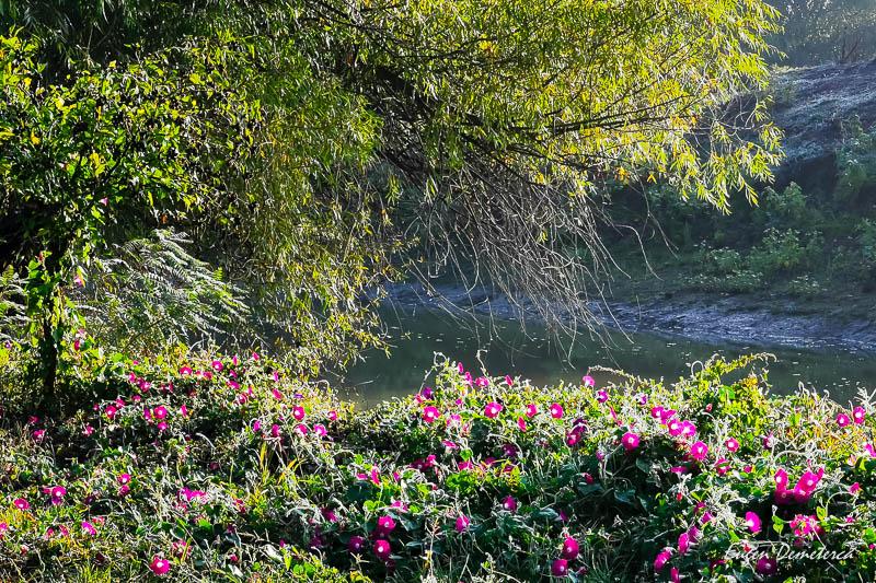 Flori in Delta Dunarii
