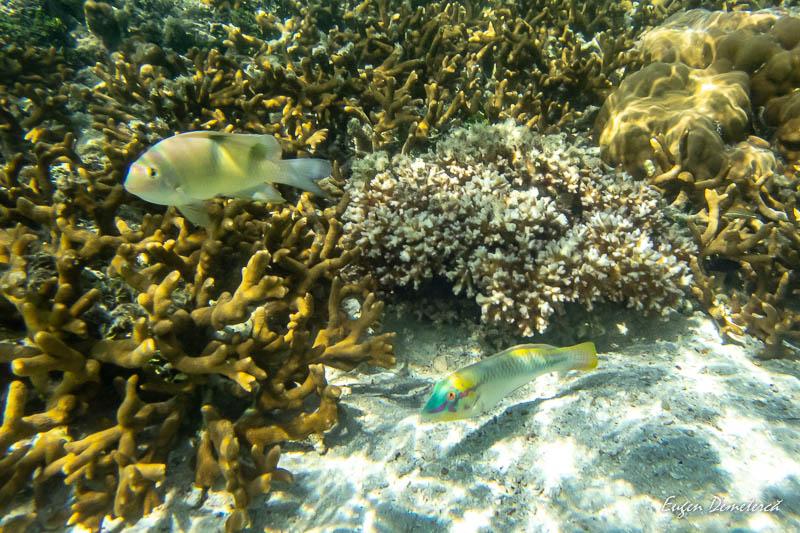 P1035414 - Koh Lipe - insula thailandeză ca o bijuterie