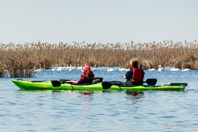 1045305 - Caiaceală de primăvară în Delta Neajlovului