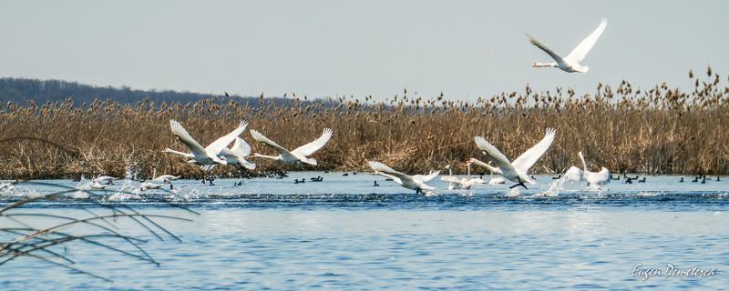 1045325 - Caiaceală de primăvară în Delta Neajlovului