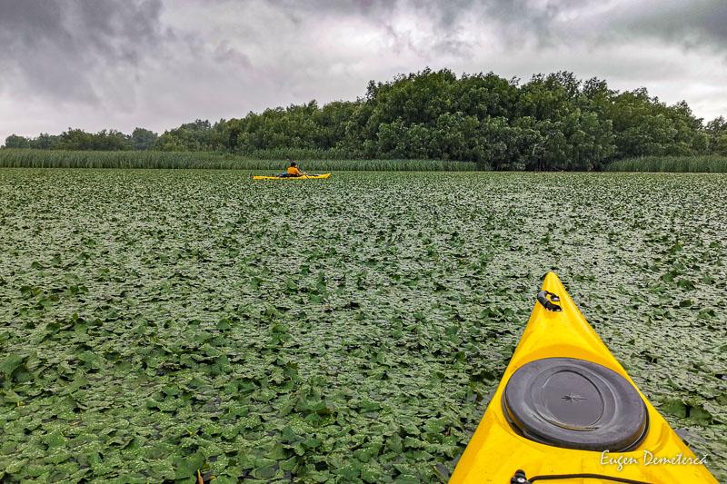 IMG 20210620 141021 - Ciclonizare în Delta Dunării