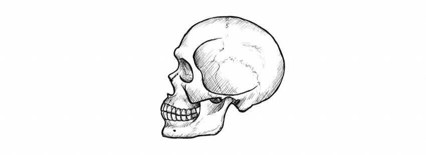 Como desenhar um crânio de perfil