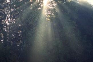 herbstliche Nebelsonnenstrahlen