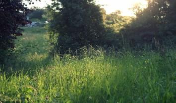 Ein Sommerbild mit Mücken