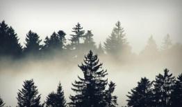 Das, was nicht Bäume sind, ist der Nebel