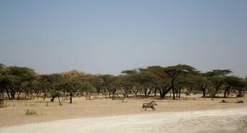 Äthiopien, Awash Nationalpark.