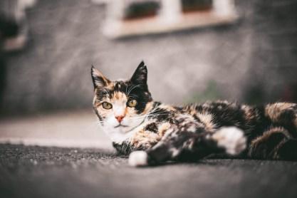 Katzen gehn immer