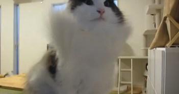 super_cat_title