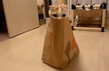 紙袋から顔を出す猫