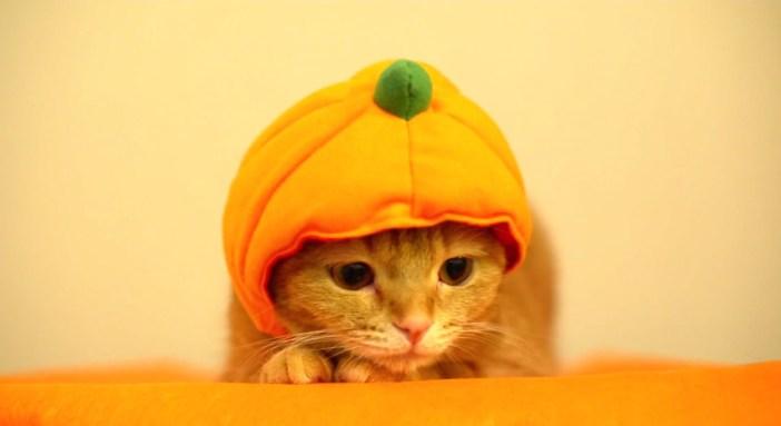 カボチャの帽子と猫