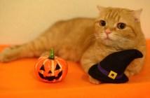 魔女の帽子と猫