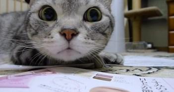 顔を左右に振る猫
