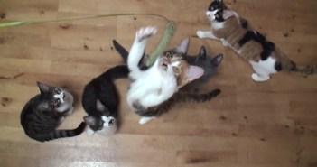 猫じゃらしにジャンプ