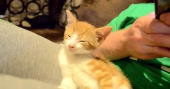 眠気と戦い続ける子猫