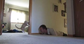 猫好きおじさん