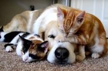 子猫と犬の幸せなお昼寝時間