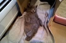 優雅にくつろぐ子猫