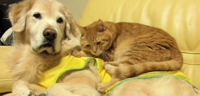犬の上が気に入った猫