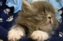 眠るのを必死で我慢する子猫