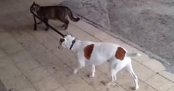 犬を散歩させる猫