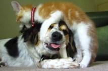 犬のおやつをじゃまする猫