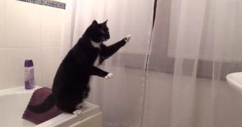 鏡の前でポーズをとる猫