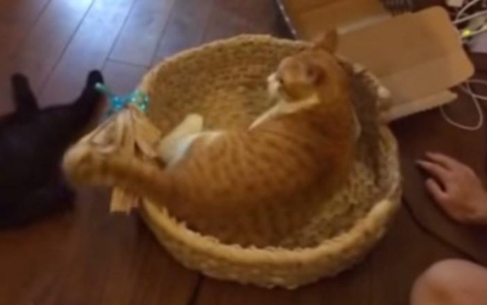 猫ちぐらがお気に入りの猫
