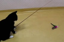 釣りをする猫