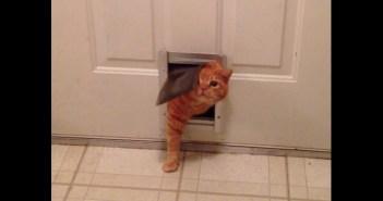 猫専用ドアがなかなか通れないポッチャリ猫