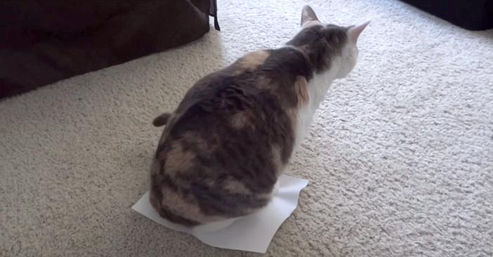 紙に座る猫
