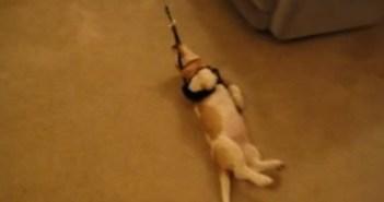 初めての散歩を拒否する犬