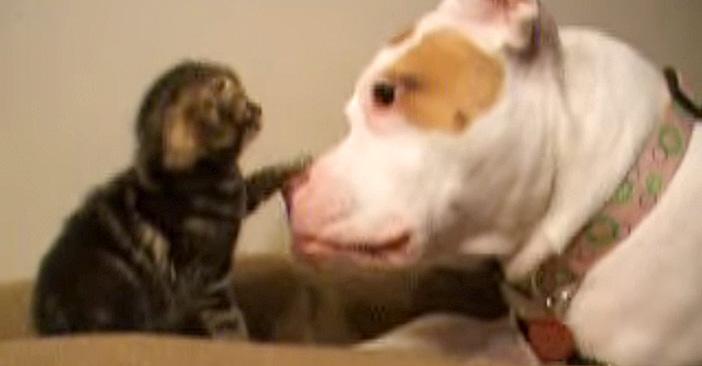 犬の鼻をペチペチする子猫