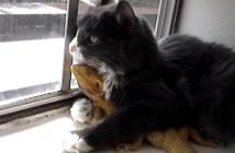 トカゲを抱き寄せる猫