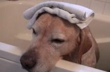 お風呂でウトウトする犬