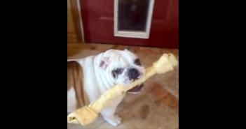 おもちゃが引っかかった犬