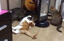 グルグル回す猫